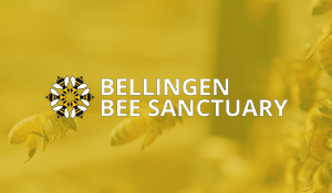 bellingen-bee-sanct